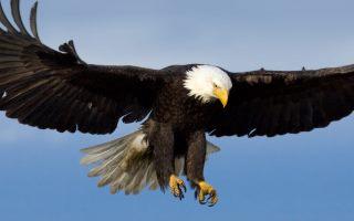 Mensagem de Ano Novo - A vida da águia